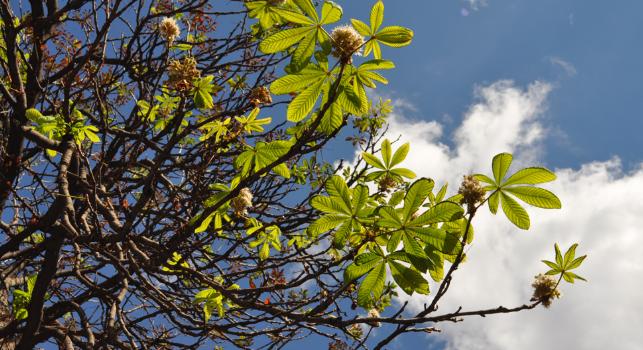 Излекувайте болежките с точното … дърво