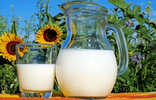 Полезно или вредно е млякото