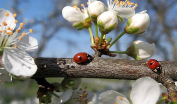 Кардиолози обясниха опасностите, които крие за здравето ни настъпването на пролетта