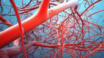 Храните, които почистват стените на кръвоносните съдове