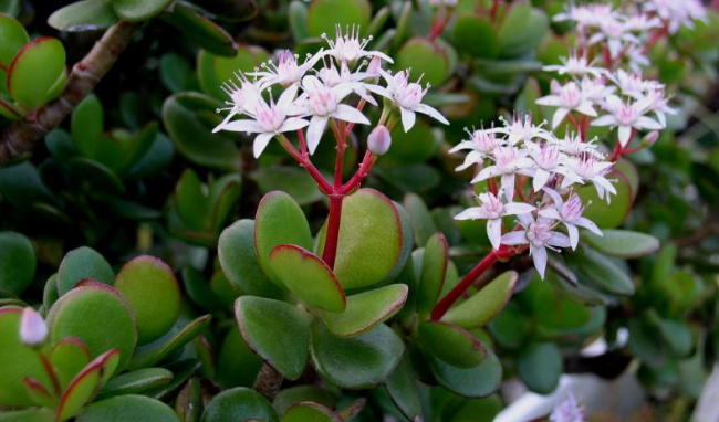 Зелените лечители 4 стайни растения, които предпазват от вируси